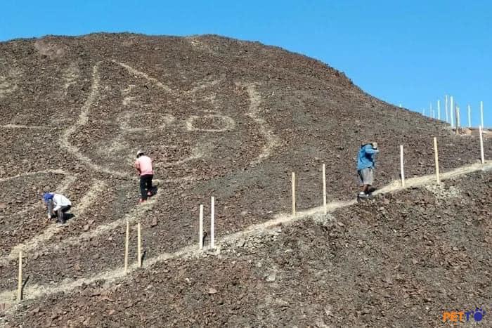 PHÁT HIỆN HÌNH VẼ MÈO KHỔNG LỒ BÍ ẨN Ở PERU