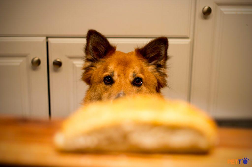 Giải pháp cho chủ nuôi khi có một chú chó biếng ăn