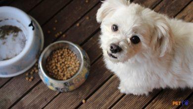 """Chó """"biếng ăn"""" là gì? Nguyên nhân và giải pháp"""