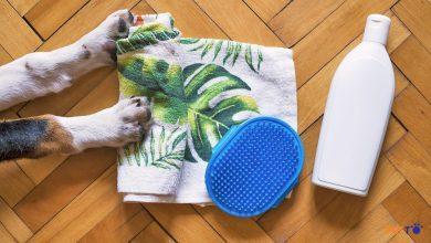 Tắm chó bằng vòi sen và bồn, cái nào tốt hơn?