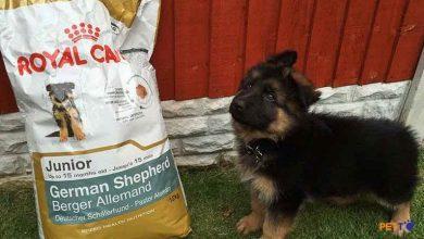 Thức ăn cho chó mèo Hãng Royal Canin có tốt không? Ưu điểm, nhược điểm và những lưu ý