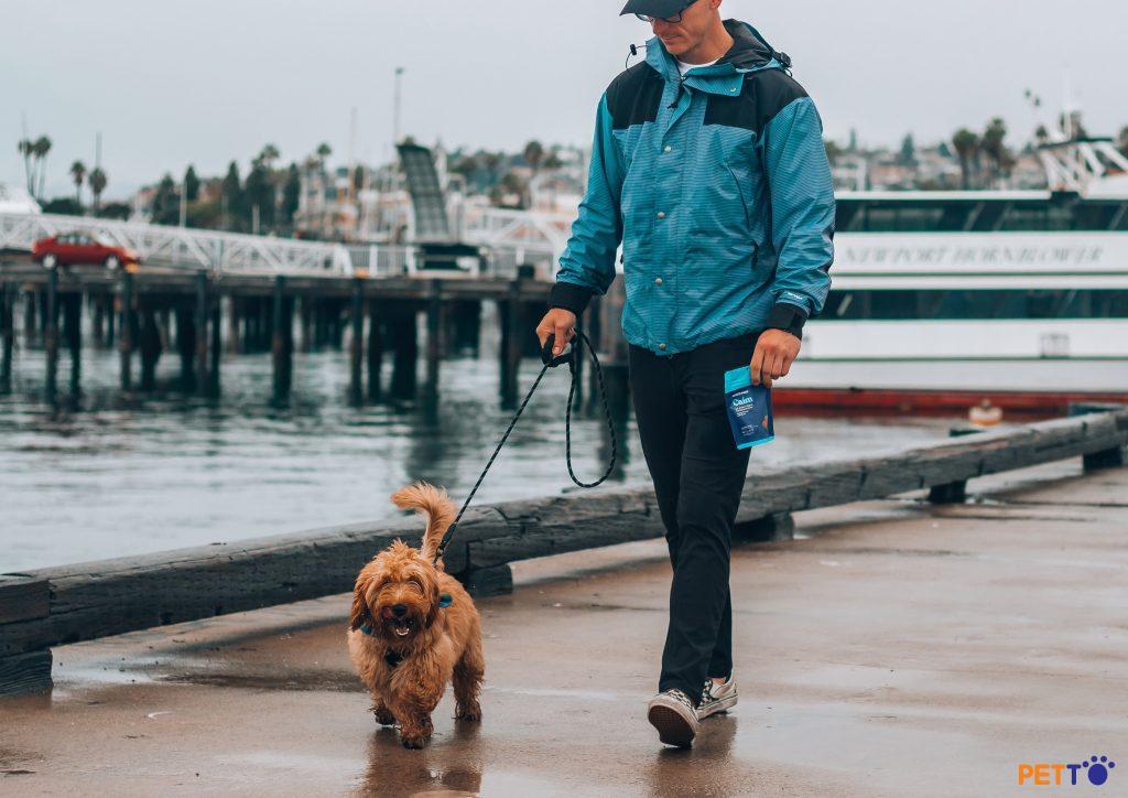 Không bao giờ dắt chó đi dạo mà không có dây dắt! Luôn cho chó đeo dây dắt