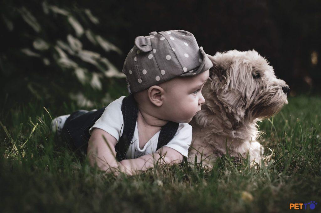 Sống chung với em bé có làm chú chó bị stress không?