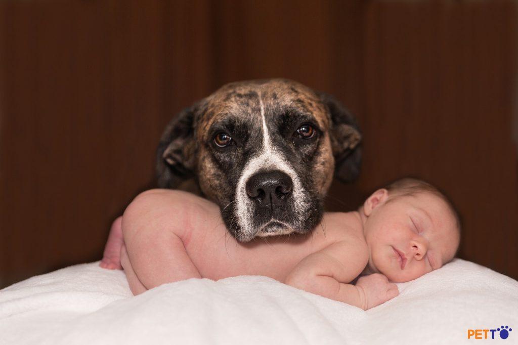 Liệu em bé và chó ở chung nhà được không?