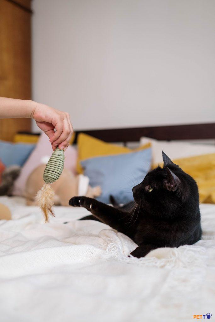 Nếu một chú mèo hoang đấm bạn thì sao?