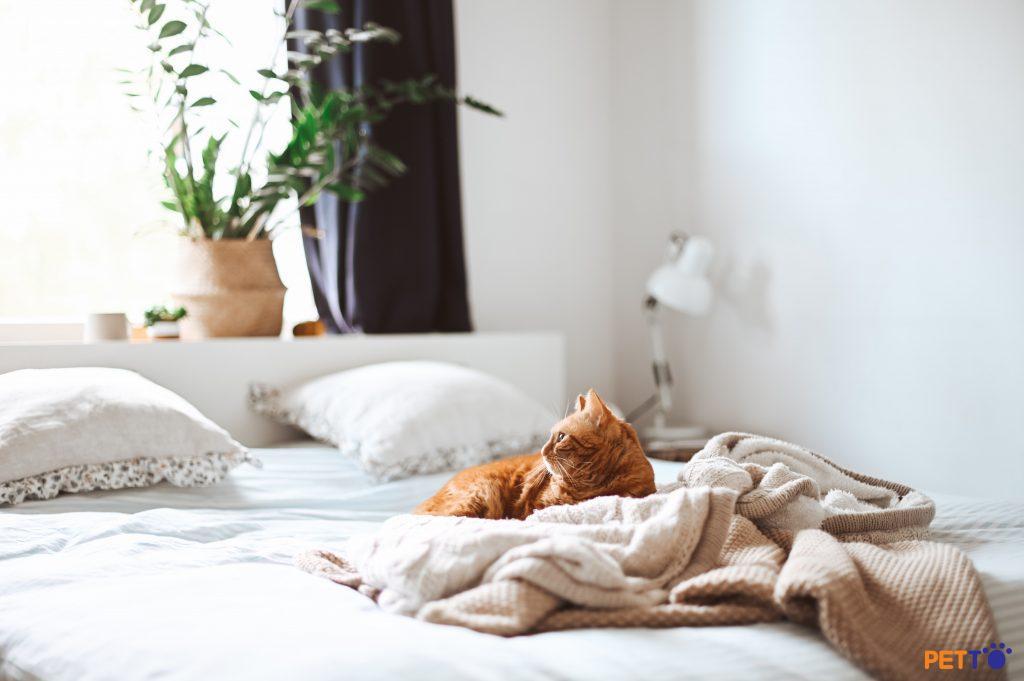Lén lút nuôi mèo ở chung cư cấm nuôi thú cưng