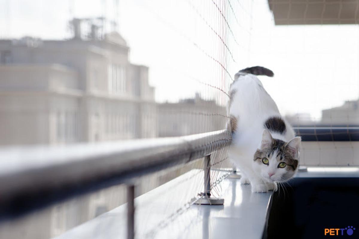 Những rắc rối khi cho mèo ra ngoài ban công