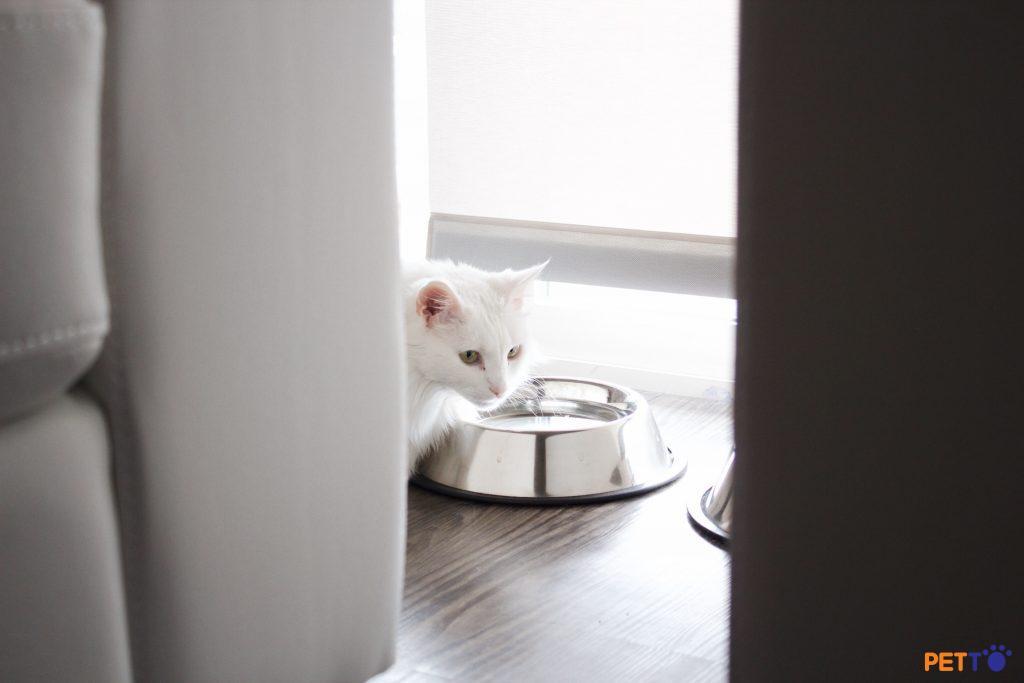 Chọn chung cư để nuôi mèo như thế nào?
