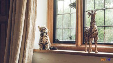 Làm sao để nuôi mèo trong chung cư?