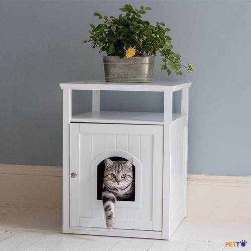 chúa và phòng vệ sinh mèo trắng Labrador