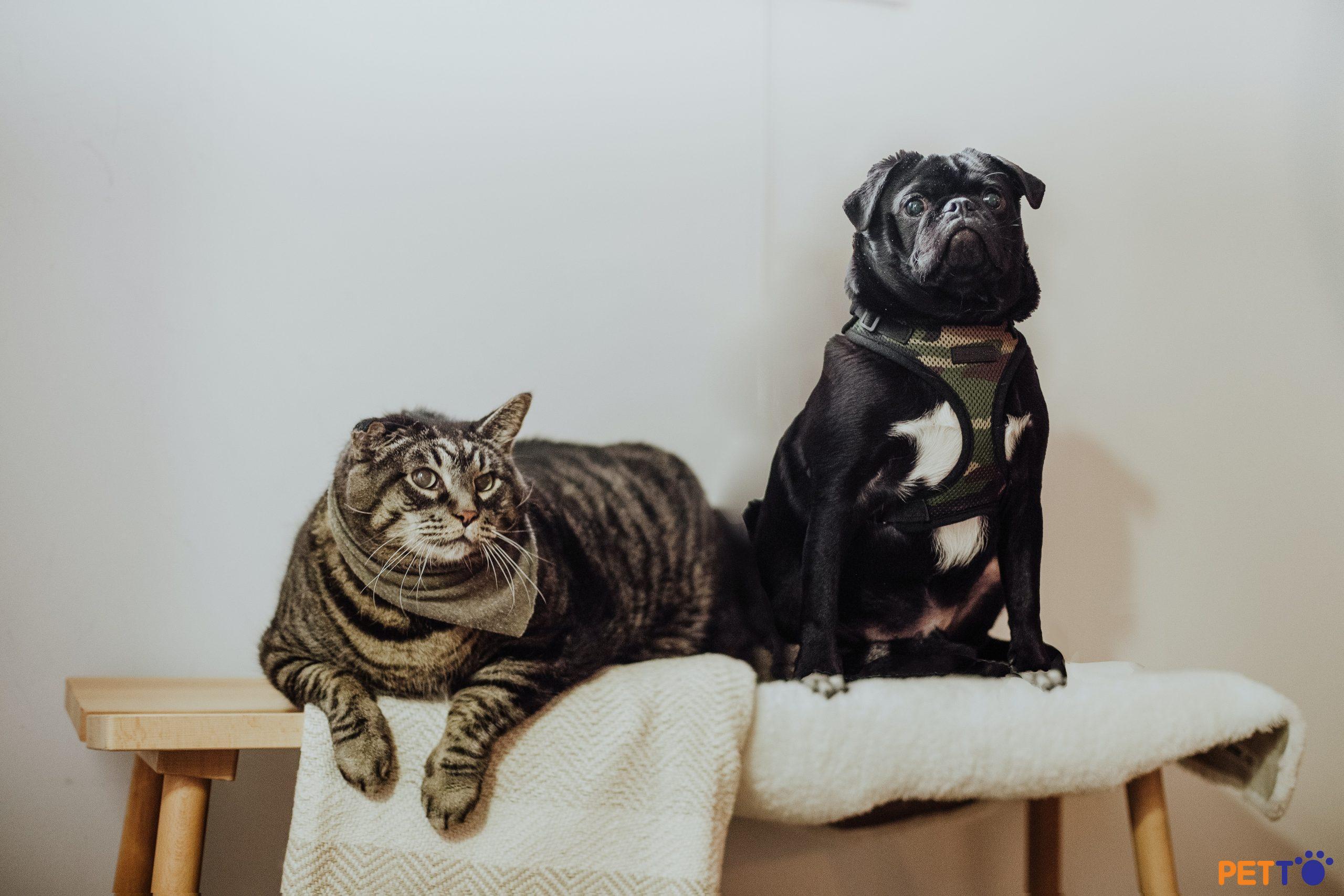 5 loài động vật không nên nuôi chung với chó