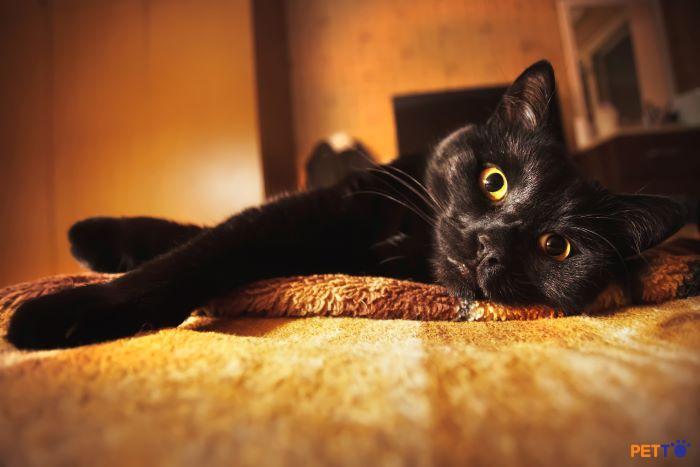 Con mèo tò mò nhìn chằm chằm