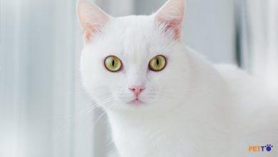 Tại sao con mèo của tôi nhìn chằm chằm vào hình ảnh nổi bật của tôi
