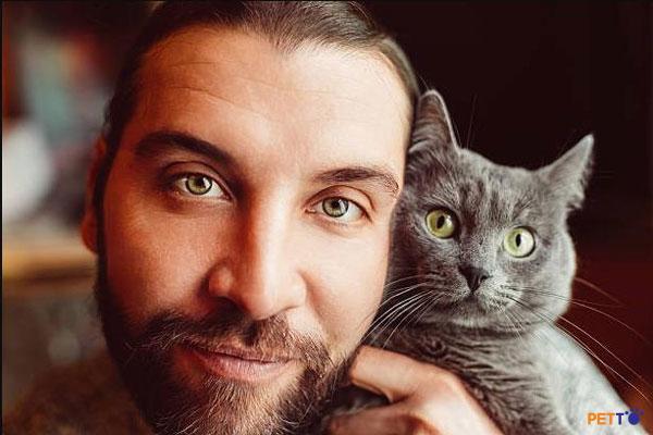 Giá mèo Anh lông ngắn cao hay thấp còn tùy thuộc vào độ thuần chủng