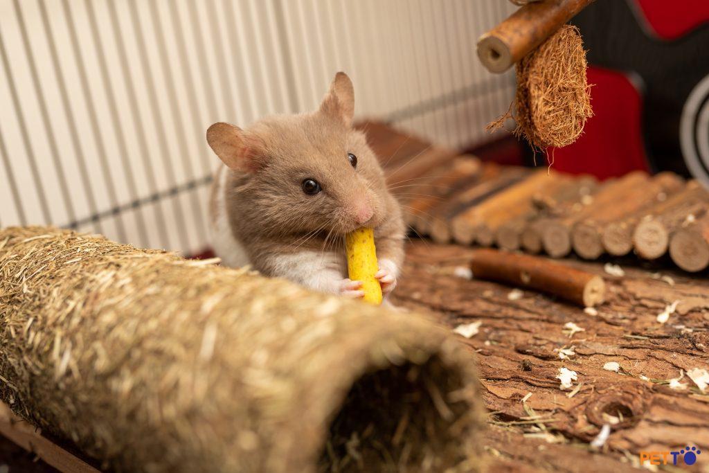 Hamster sẽ cảm nhận chó như kẻ săn mồi của chúng