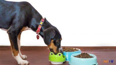 Cách để chọn bát đựng thức ăn cho chó