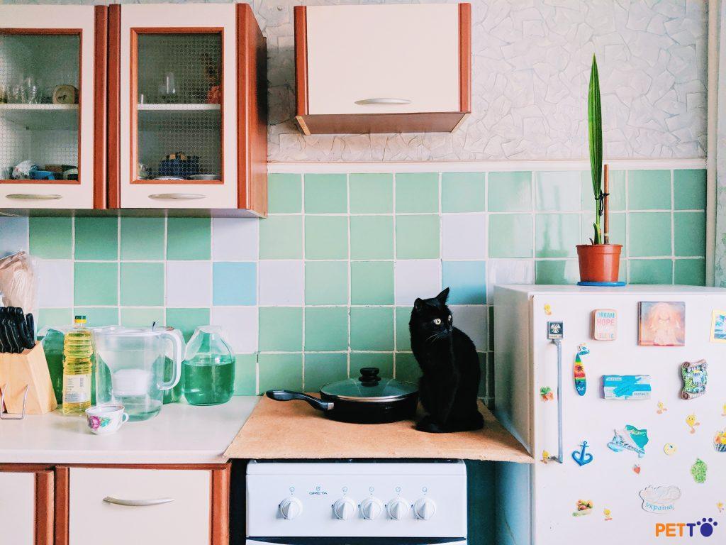 Chúng ta nuôi mèo ở chung cư được không?