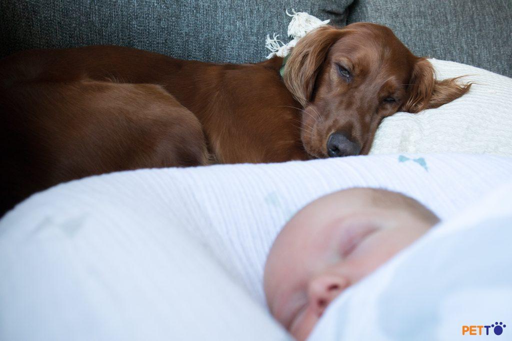 Liệu có nguy hiểm không khi em bé và chó ở chung nhà?
