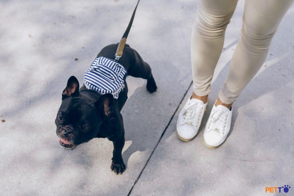 Những loại dây dắt chó nên và không nên sử dụng