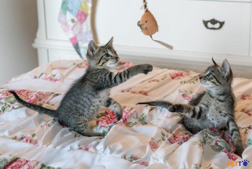 Mèo đấm/vả cho vui