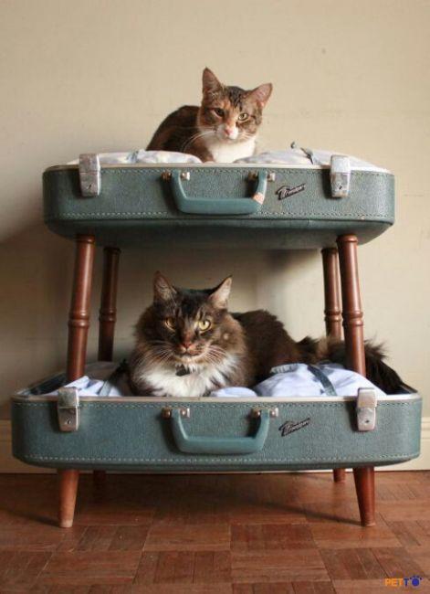 Tận dụng chiếc vali cũ cũng có thể biến thành ngôi nhà hoàn hảo cho những chú mèo