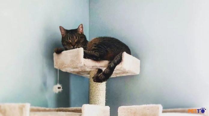 nhà cây cho mèo cat tree