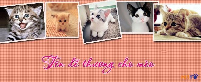 Đặt tên cho mèo dựa vào ngoại hình là cách được nhiều người lựa chọn