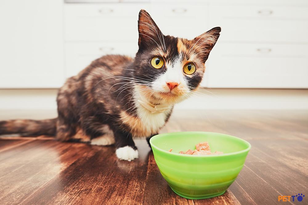 Mèo là động vật ăn thịt